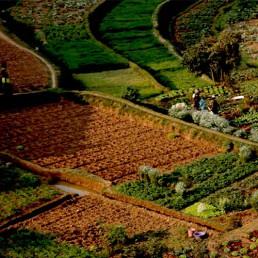 Coltivazione di Moringa